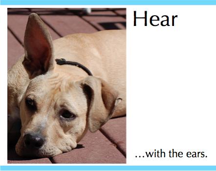 sho ear